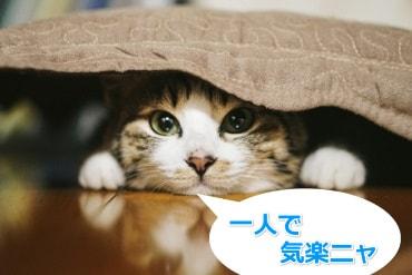 猫が隠れる